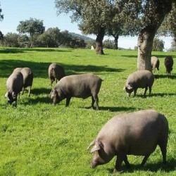 Acorn- Fed 100%  Iberico Ham  Pata Negra  - DPO  Guijuelo