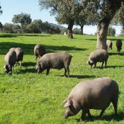 Acorn- Fed 50%  Iberico Ham  Pata Negra  - DPO  Guijuelo- Faustino Prieto